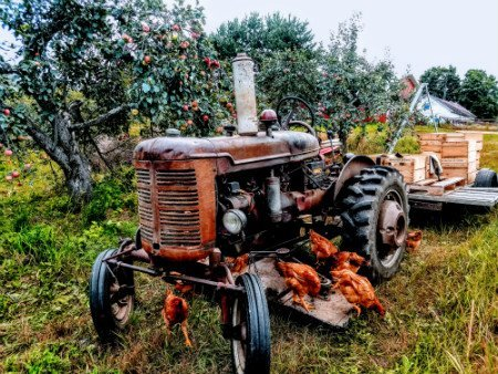 Photo of old tractor in the apple orchard